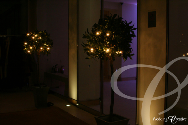 Topiary Bay Tree Hire Wedding
